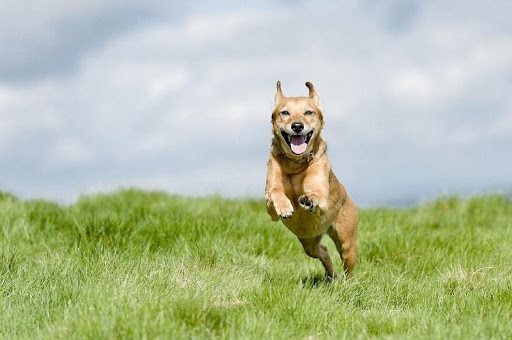 The Side Effects of Gabapentin for Dogs and Its Alternatives